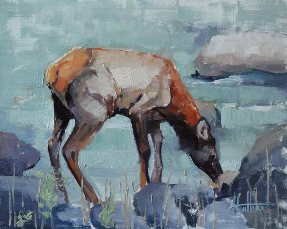 """Elk Study #4"" original fine art by Abigail Gutting"
