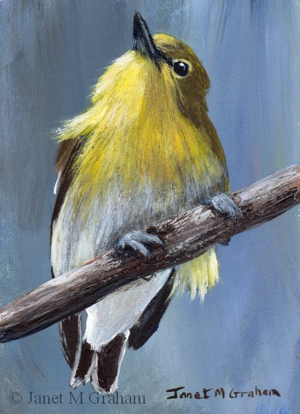 """Yellow Throated Vireo ACEO"" original fine art by Janet Graham"