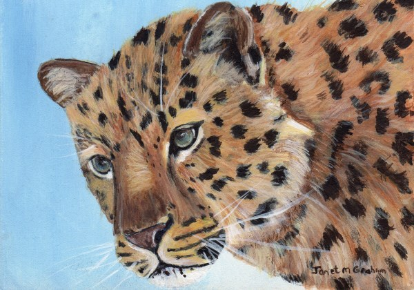 """Leopard ACEO"" original fine art by Janet Graham"