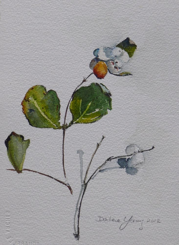 """566 Snow Berries"" original fine art by Darlene Young"