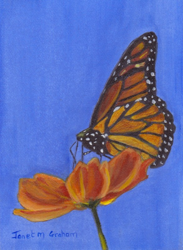 """Monarch Butterfly ACEO"" original fine art by Janet Graham"