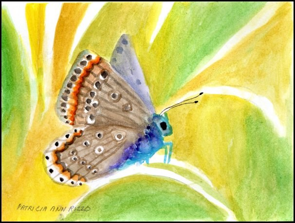"""Watercolor Butterfly"" original fine art by Patricia Ann Rizzo"