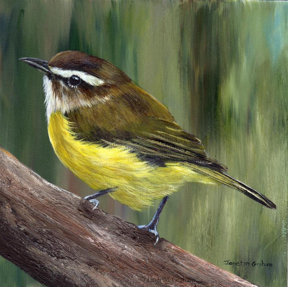 """Brown Capped Vireo"" original fine art by Janet Graham"