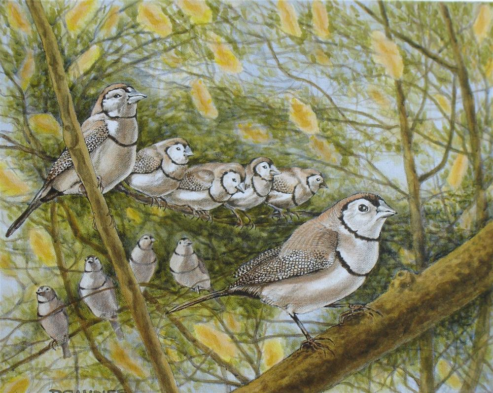 """292 DOUBLE-BARRED FINCHES"" original fine art by Trevor Downes"