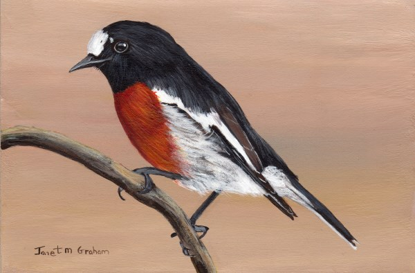 """Scarlet Robin"" original fine art by Janet Graham"