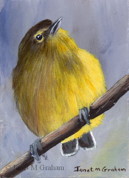 """Orange Crowned Warbler ACEO"" original fine art by Janet Graham"