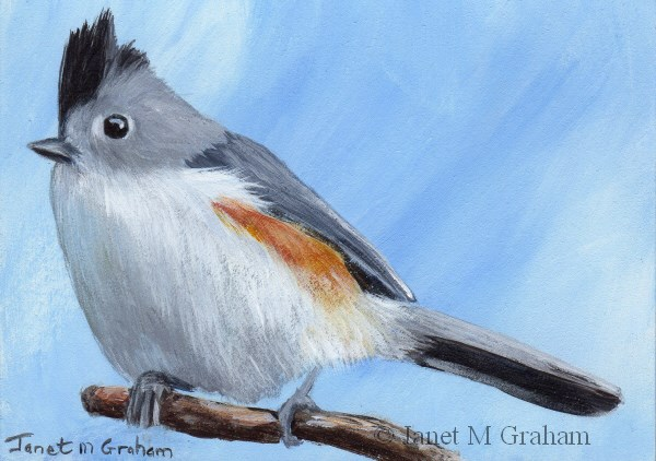 """Black Crested Titmouse ACEO"" original fine art by Janet Graham"