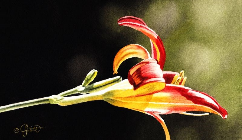 """Red & Yellow Lily"" original fine art by Jacqueline Gnott, TWSA, WHS"