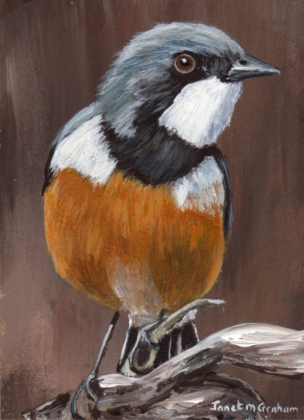 """Rufous Whistler ACEO"" original fine art by Janet Graham"