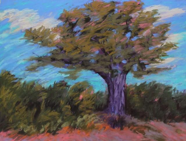 """Arles Tree"" original fine art by Sharon Lewis"