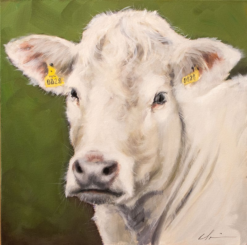 """Curly Cow"" original fine art by Clair Hartmann"