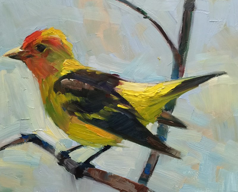 """Tanager Tanning, Pacific Northwest Style"" original fine art by Patti McNutt"
