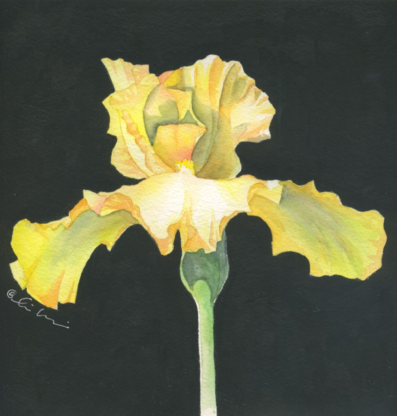 """yellow iris"" original fine art by Hui (Hue) Li"