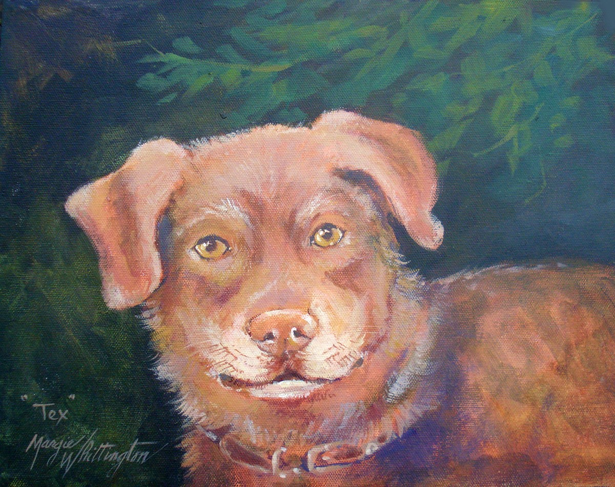 """Portrait of TEX"" original fine art by Margie Whittington"