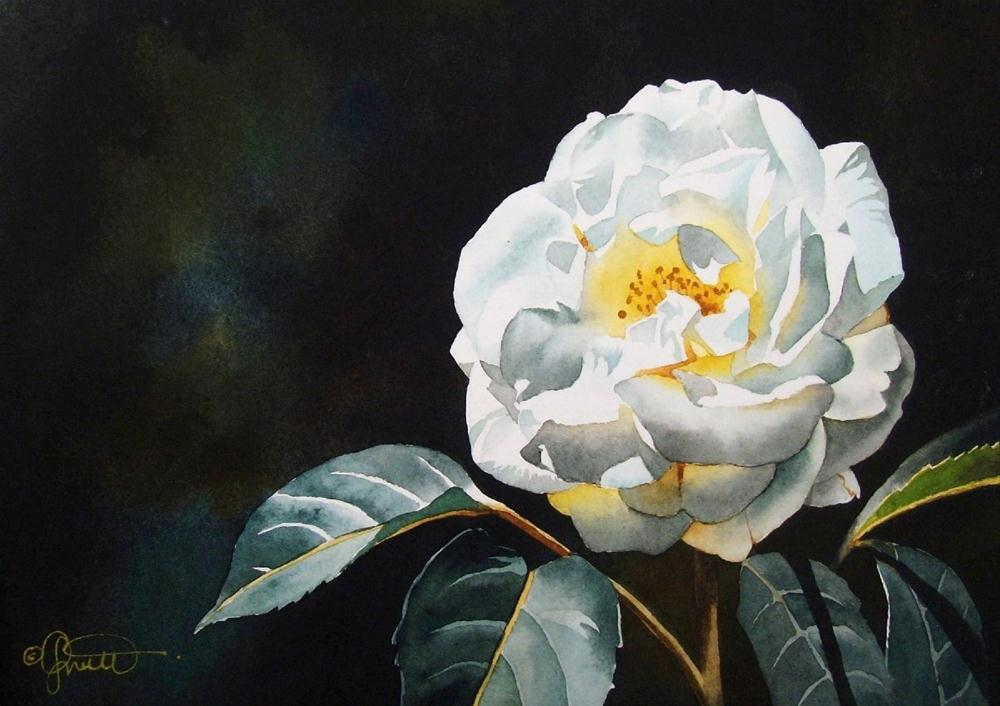 """White Wild Rose"" original fine art by Jacqueline Gnott, TWSA, WHS"