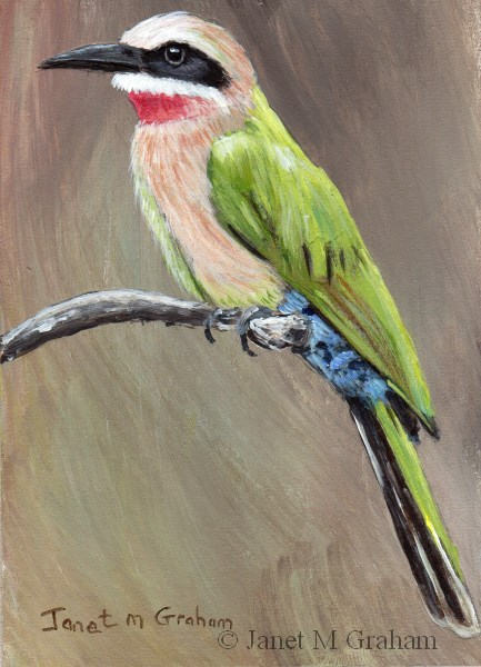 """White Fronted Bee Eater"" original fine art by Janet Graham"