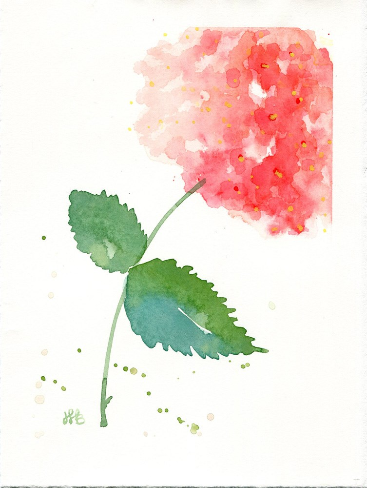 """Hydrangea Singleton"" original fine art by Heather Bennett"