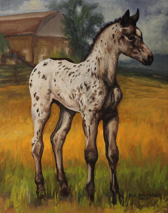 """""""Appaloosa filly"""" original fine art by Sue Deutscher"""