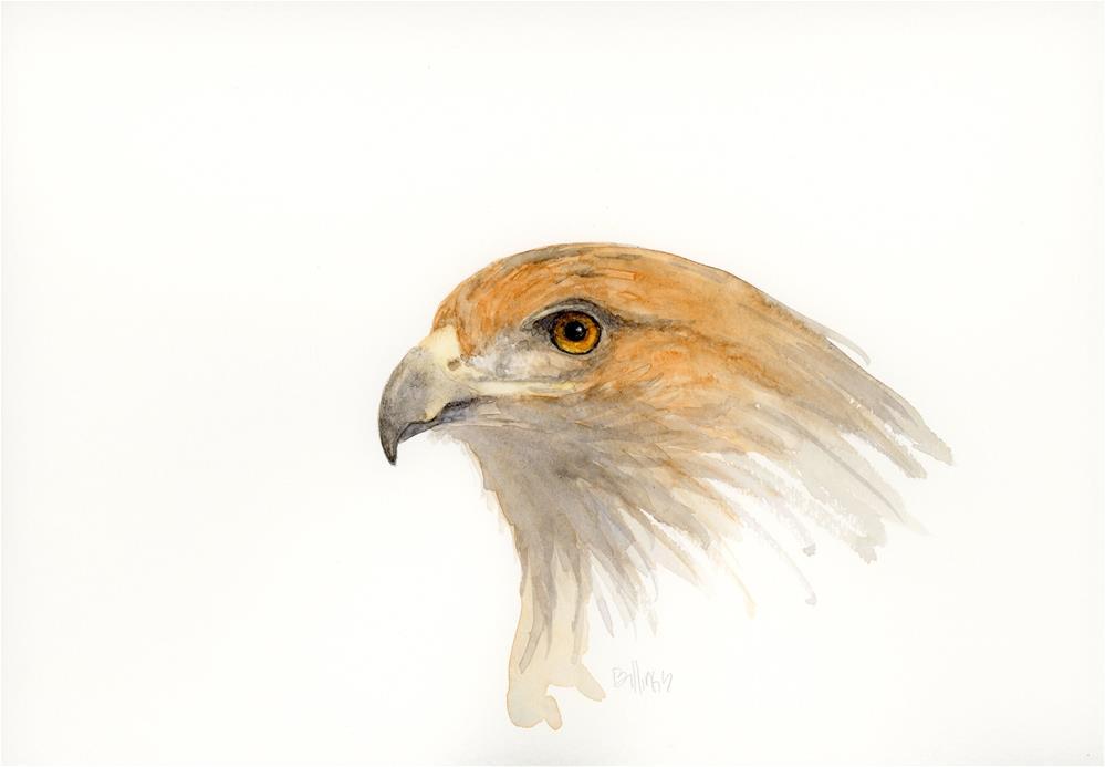 """""""Redtail Hawk Study I"""" original fine art by Susanne Billings"""