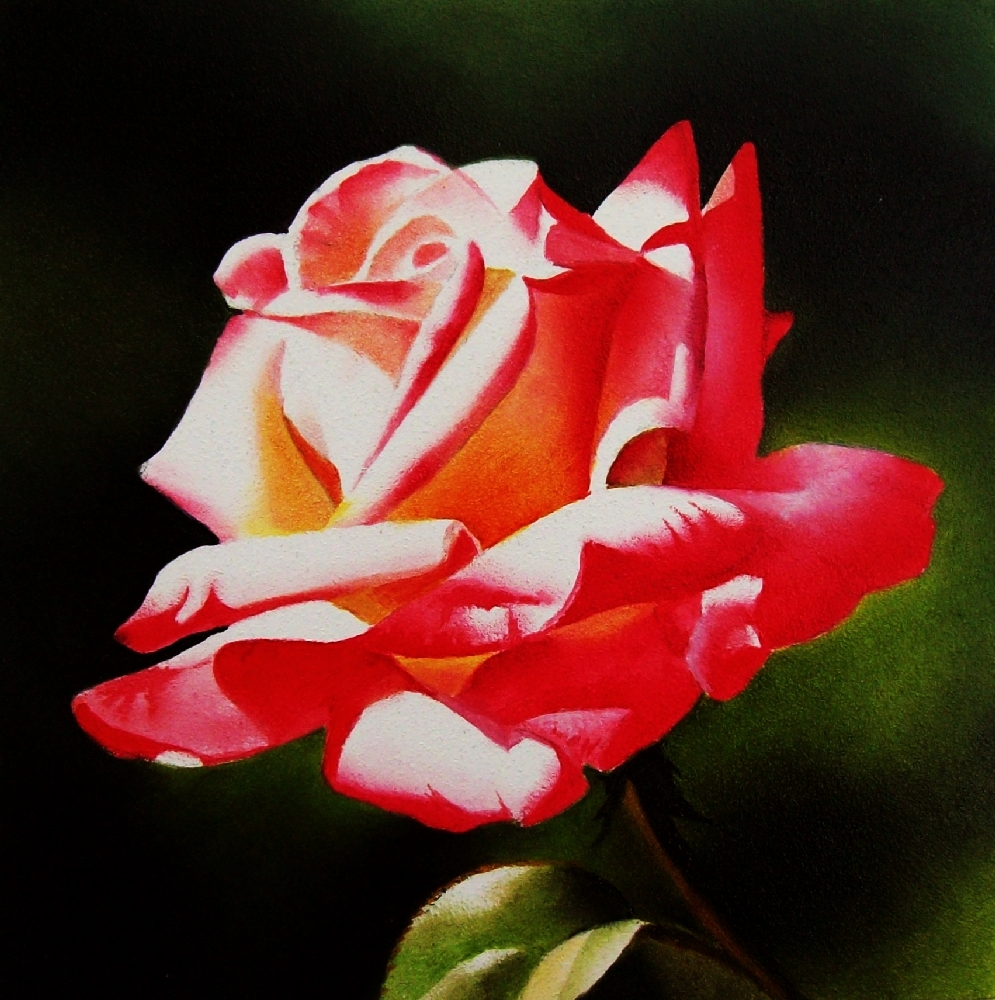 """Summer Glow Rose - Oil"" original fine art by Jacqueline Gnott, TWSA, WHS"