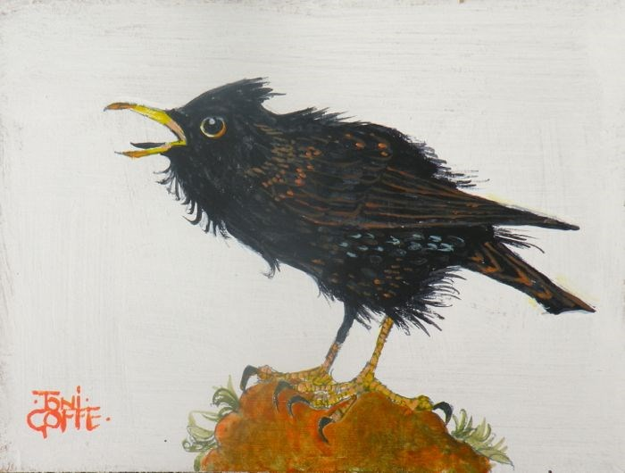"""Starling"" original fine art by Toni Goffe"