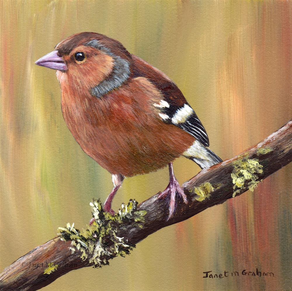 """Chaffinch"" original fine art by Janet Graham"
