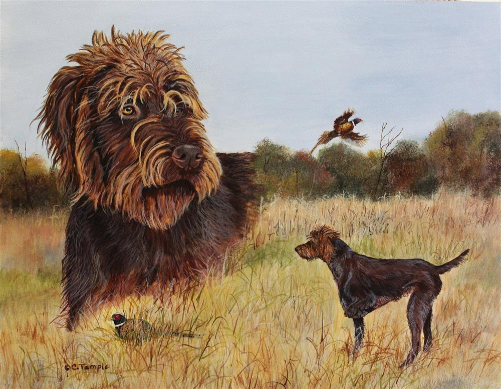 """Porter - A Pudelpointer"" original fine art by Catherine Temple"