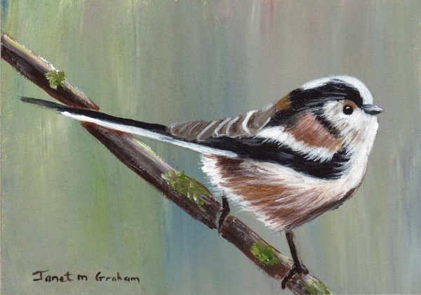 """Long Tailed Tit ACEO"" original fine art by Janet Graham"