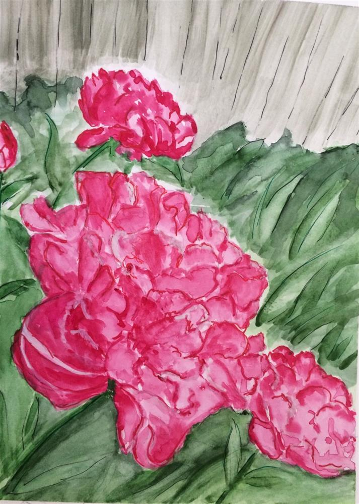 """Peonies  9 x 6 Watercolor"" original fine art by Nancy Beard"