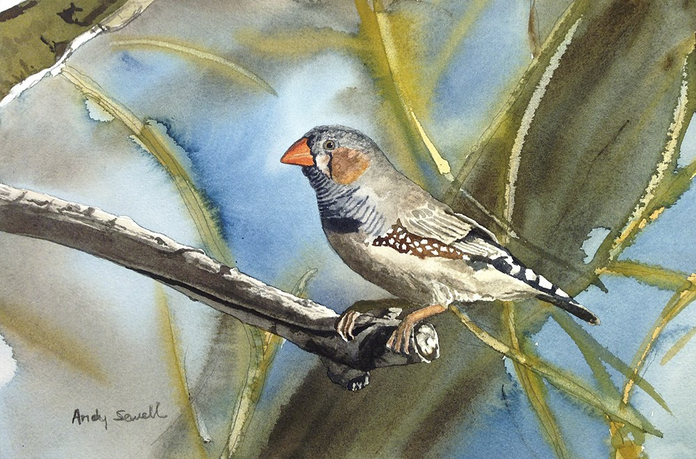 """Z is for Zebra Finch"" original fine art by Andy Sewell"