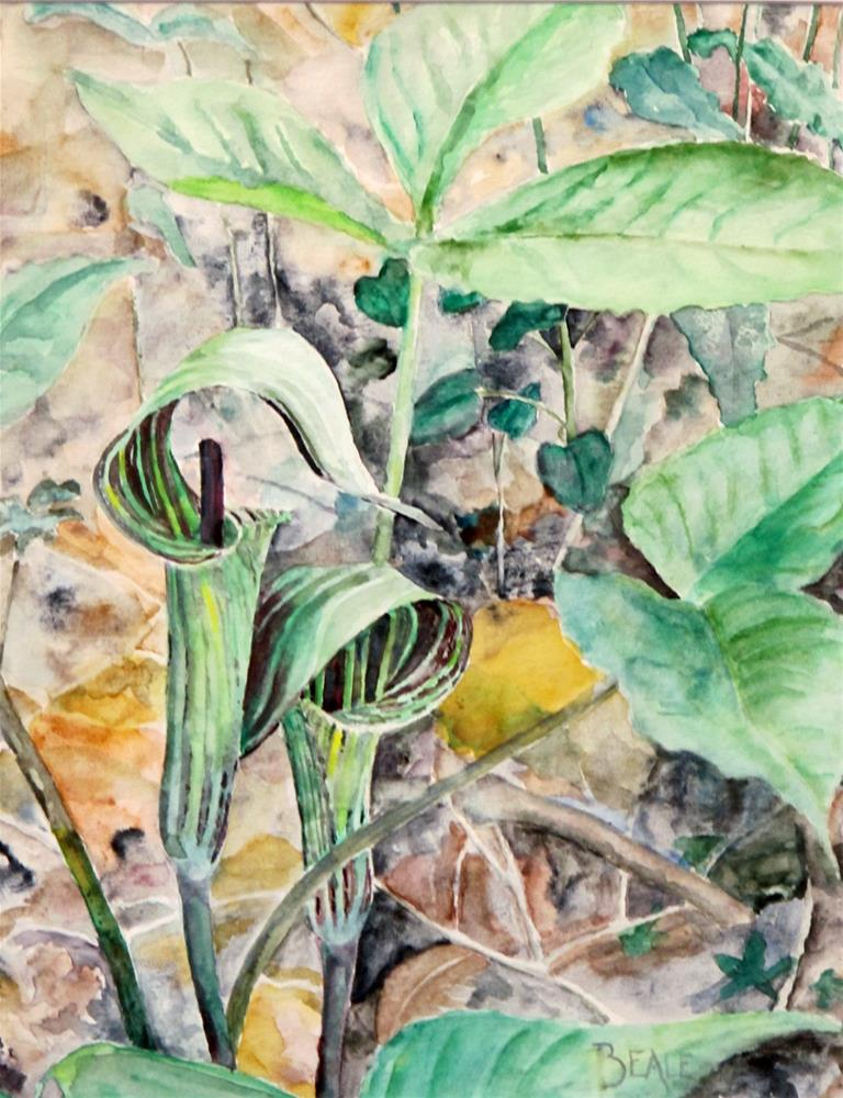 """Jack in the Pulpits"" original fine art by  David Beale"