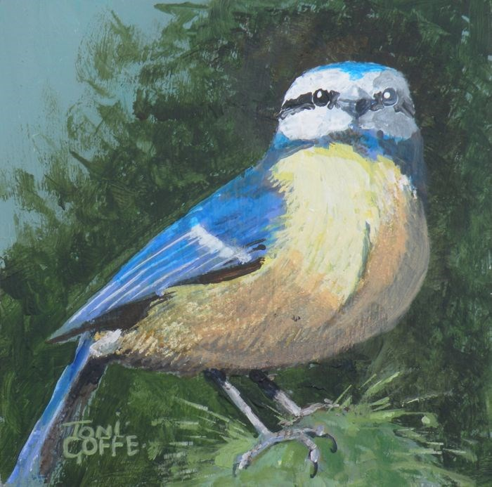 """Blue Tit"" original fine art by Toni Goffe"