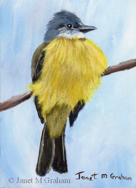 """Couch's Kingbird ACEO"" original fine art by Janet Graham"