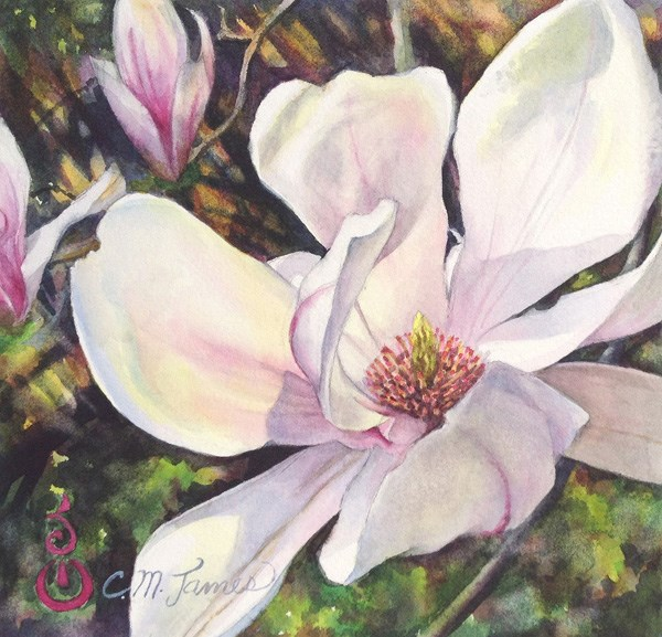 """Magnolia Blossom Opening #2"" original fine art by Catherine M. James"