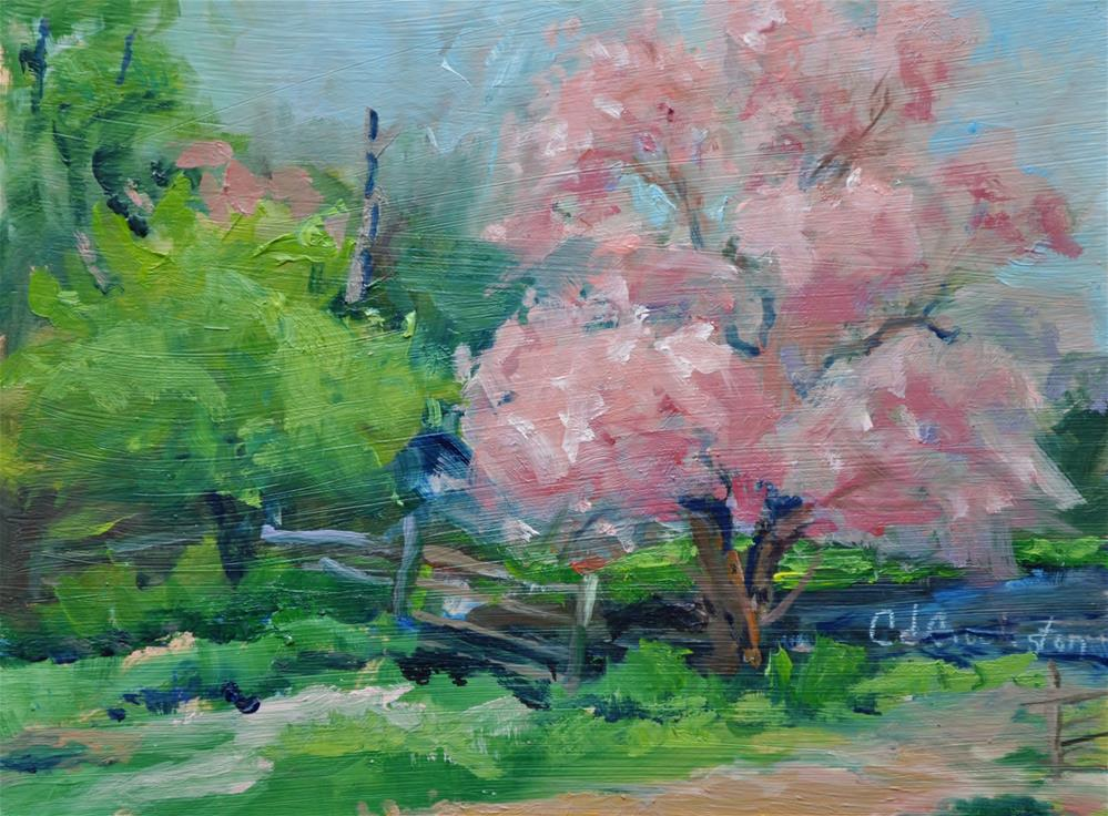 """Apple Blossoms"" original fine art by Catherine Crookston"