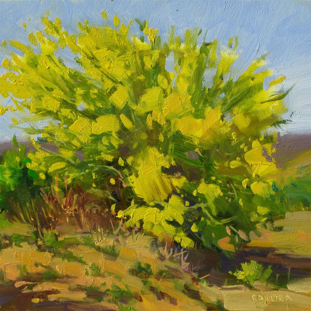 """PALO VERDE IN BLOOM"" original fine art by James Coulter"