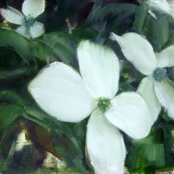 """White Kousa Dogwood (no.71)"" original fine art by Michael William"
