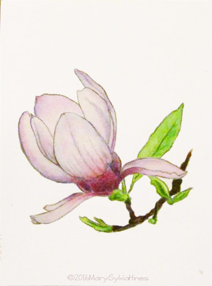 """Magnolia Blossom 1"" original fine art by Mary Sylvia Hines"