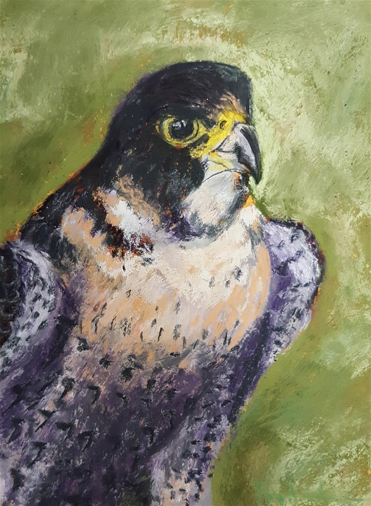 """Peregrine Falcon"" original fine art by Phyllisha Hamrick"