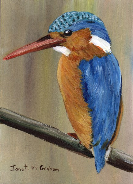 """Malachite Kingfisher ACEO"" original fine art by Janet Graham"