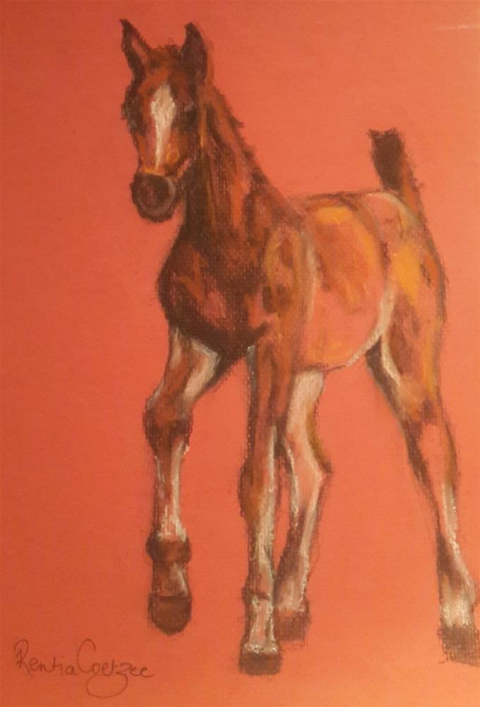 """Arab foal in charcoal"" original fine art by Rentia Coetzee"