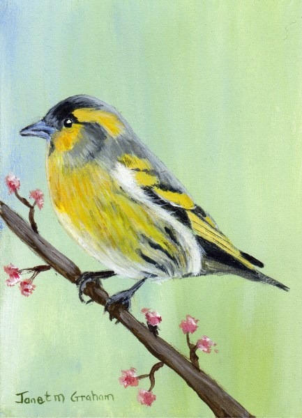 """Siskin ACEO"" original fine art by Janet Graham"