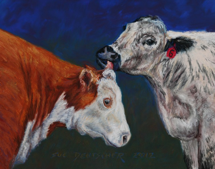"""Cowlick"" original fine art by Sue Deutscher"