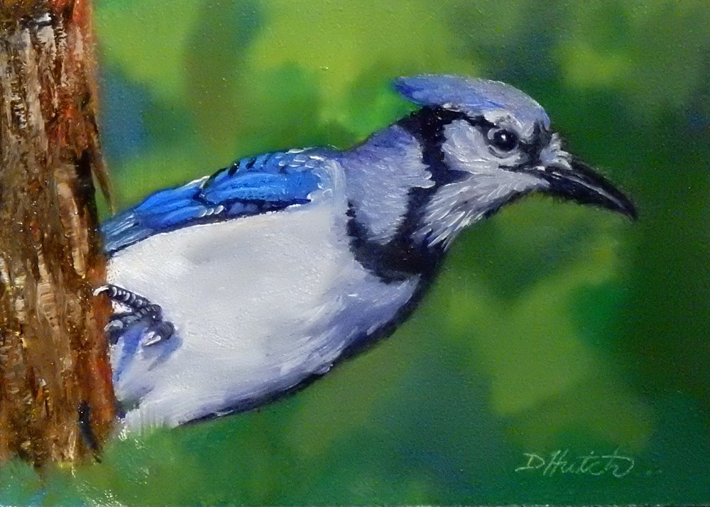 """Blue Jay #1"" original fine art by Diane Hutchinson"
