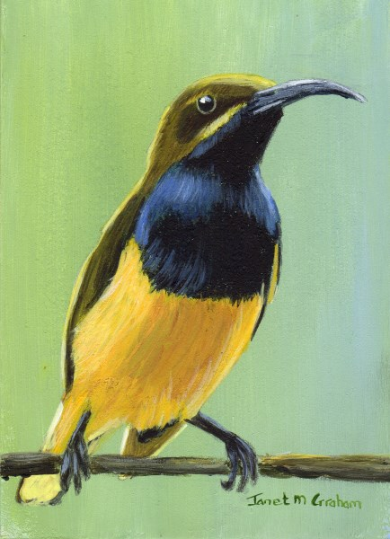 """Olive Backed Sunbird ACEO"" original fine art by Janet Graham"