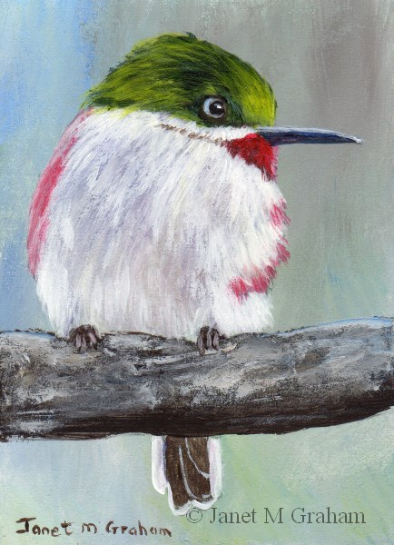 """Narrow Billed Tody ACEO"" original fine art by Janet Graham"