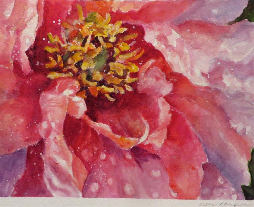 """812 Peony"" original fine art by Diane Campion"