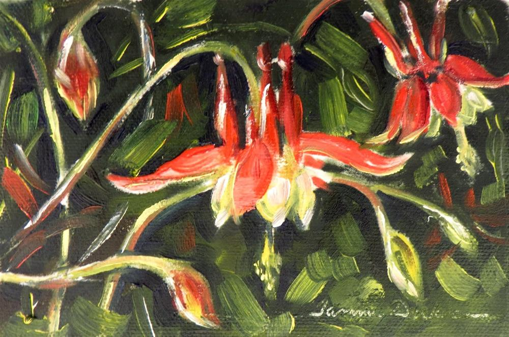"""Firecracker Columbine"" original fine art by Tammie Dickerson"
