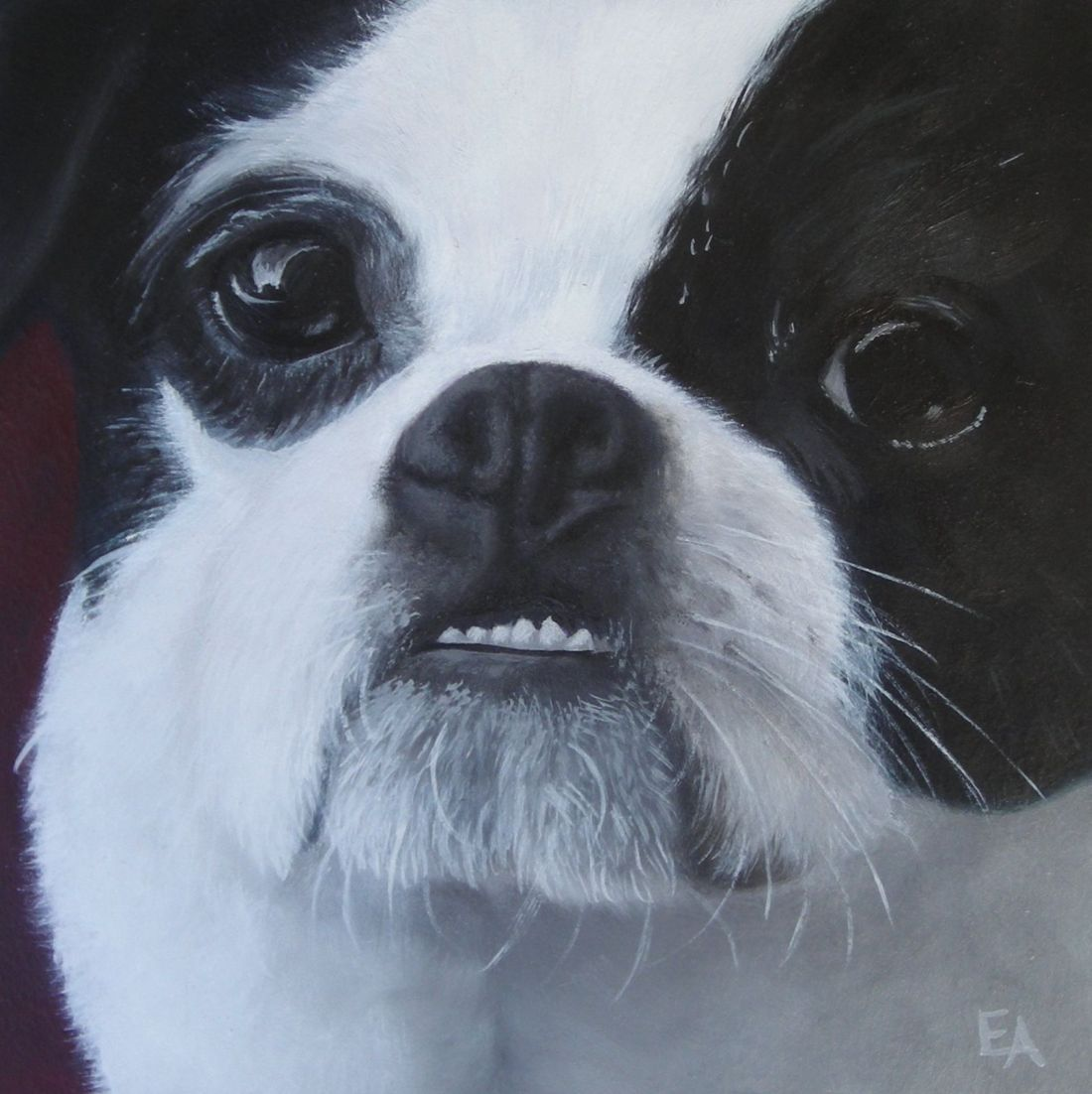 """Boston Terrier Underbite"" original fine art by Elizabeth Elgin"