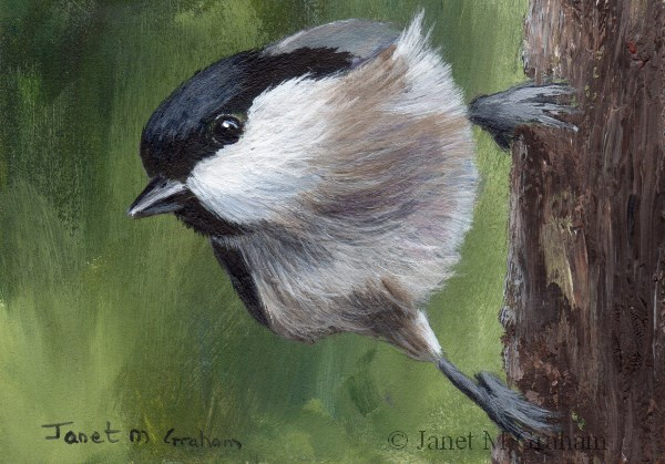 """Marsh Tit ACEO"" original fine art by Janet Graham"